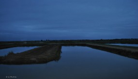 Bassin ostréïcole
