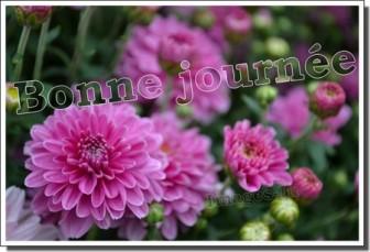 bonne-journee-fleurs-1b-1